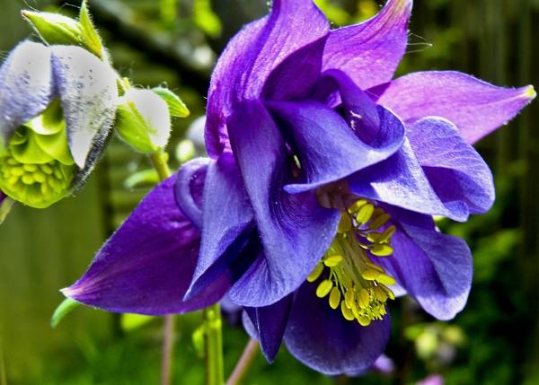 Garden Colour2 by Stuart463