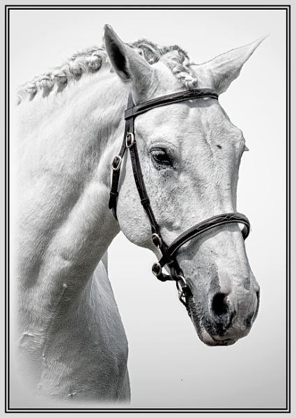 White Horse in B&W by Stuart463