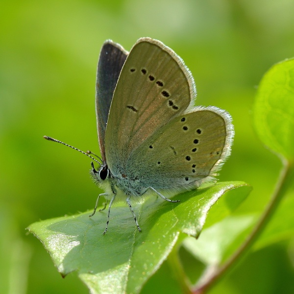 Small Blue by colin beeley