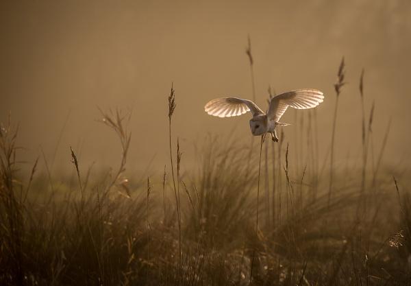 Owls World by ianrobinson