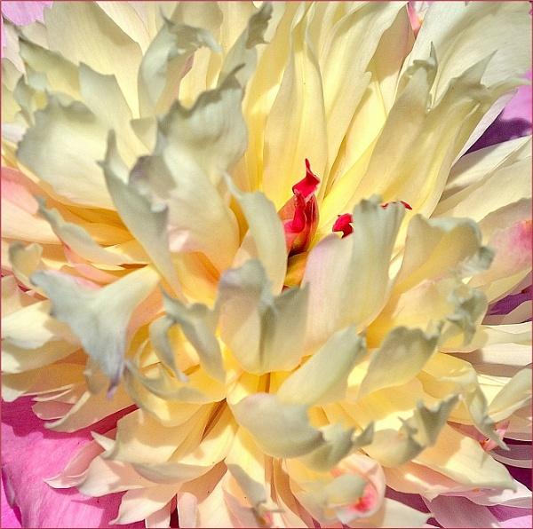 Beauty is on the inside by sweetpea62