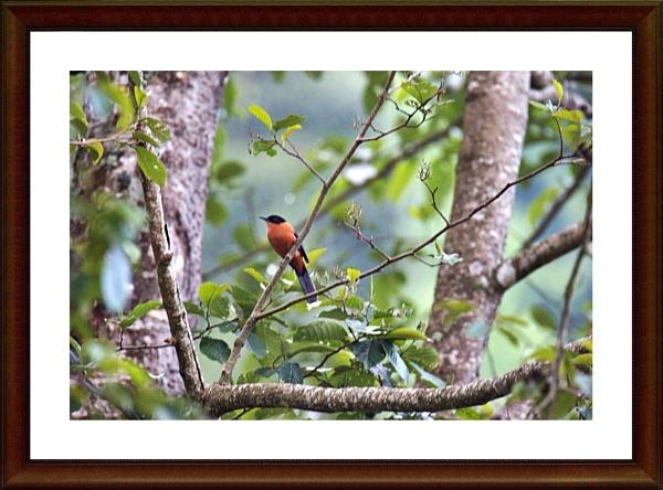 charm in Jungle by ARGHYASIKDAR