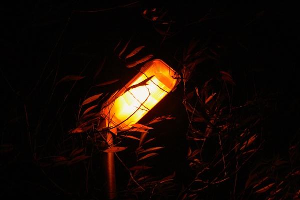 Light in the tree by jimbob5643