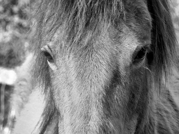 Look Deep into my eyes...... by steve_i