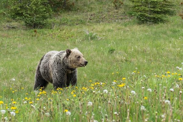 One Cool Bear by StrayCat