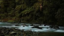 Waioeka Gorge, NZ
