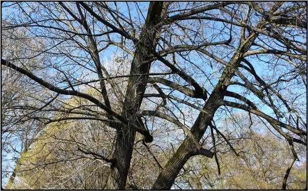 spring branches by FabioKeiner