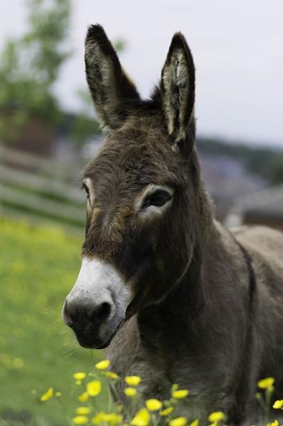 Little donkey by pentaxpatty