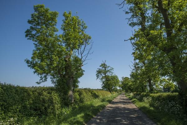 Dusty Lane by feen96