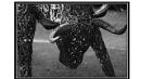 Bull Sculputre by IreneClarke