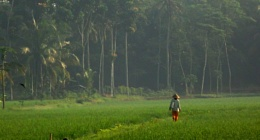 Going to the rice field early in the morning