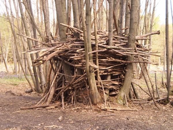 English coppice wood bears den ! by blackswan14