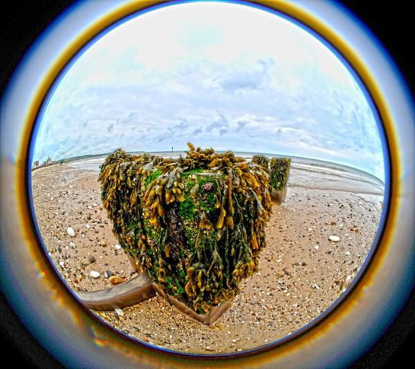 Seaweed by shaz4