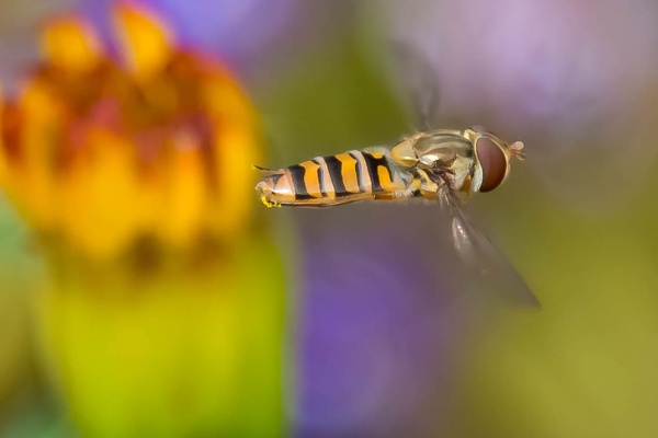 Hover by michaelo