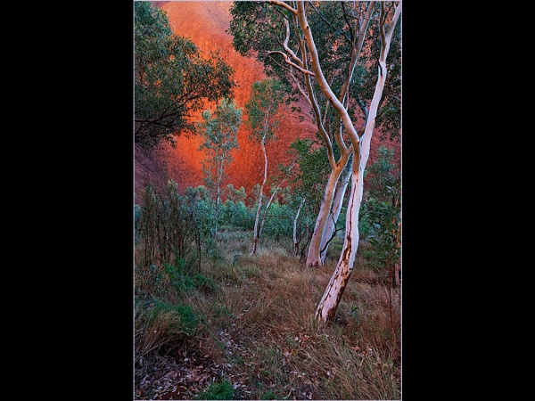 Ghost Gums by SuperRoo