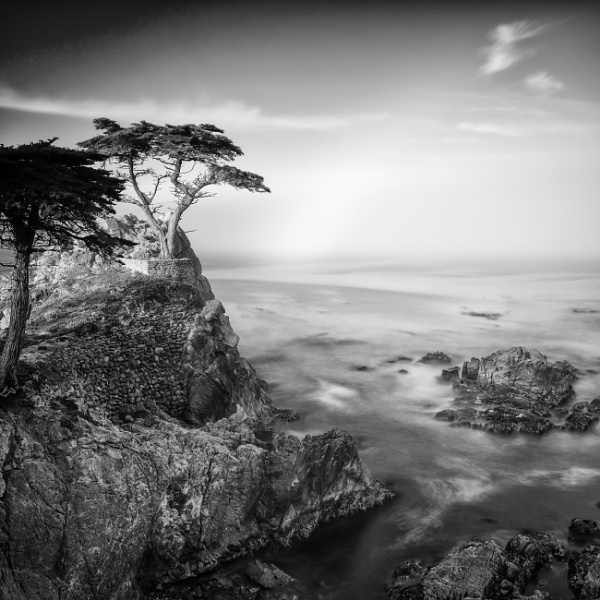 The Not So Lone Tree by RobboB