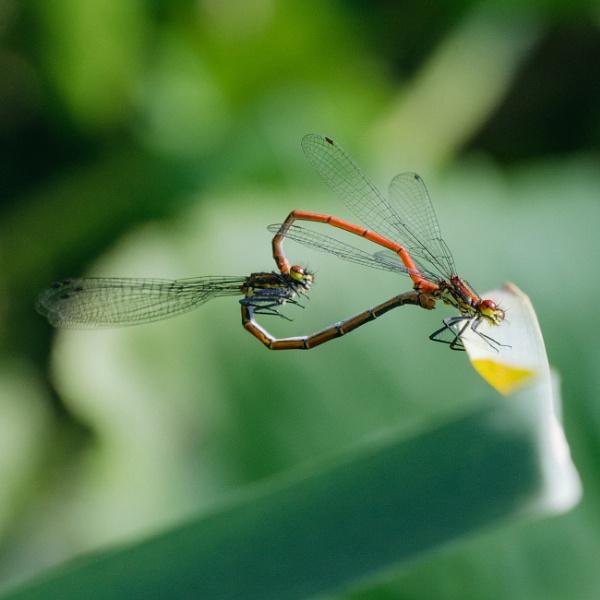 Damsel fly by jackdeakin