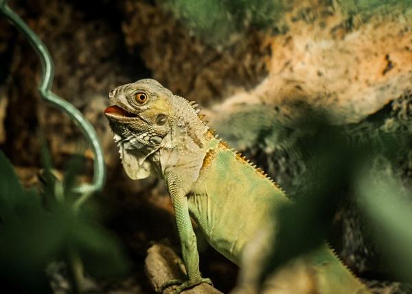 Gecko by JFitz