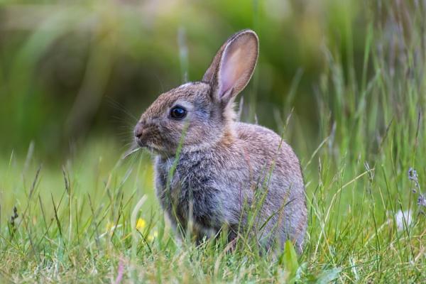 Baby Rabbit by WorldInFocus