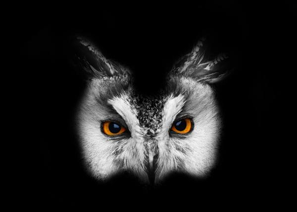 Wise Owl by matrix45