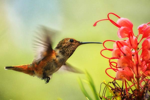 Hummingbird at LA Zoo by john_w168
