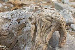 Strange Wood