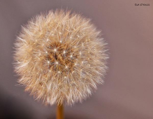 A close-up shot. by sidnox