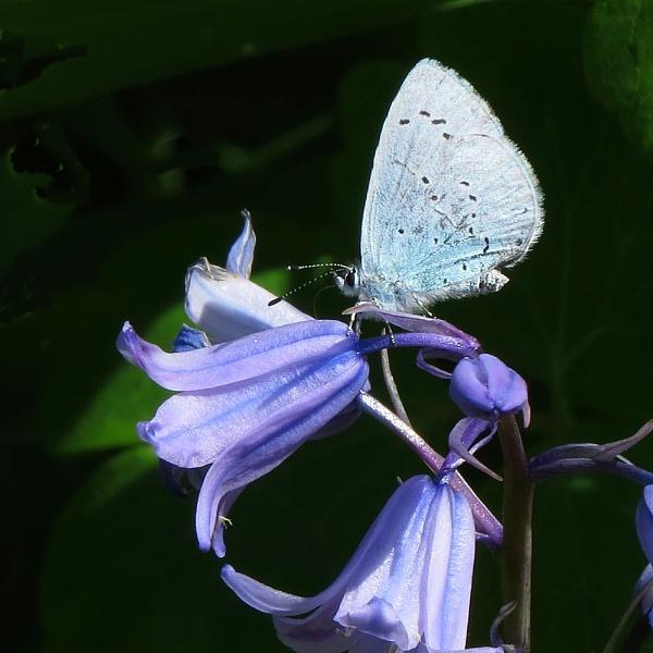 Blue by petebfrance