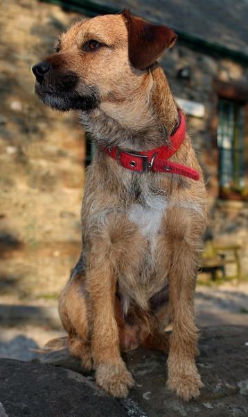 Doug Dog by Cumbria1