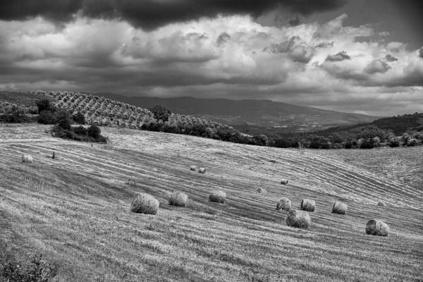 Marche Harvest by Backabit