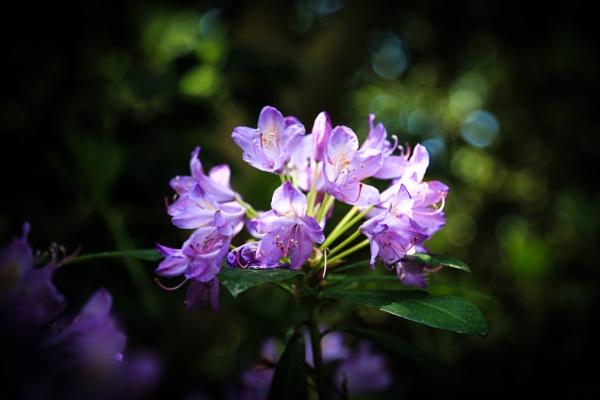 One more flower by brianwakeling