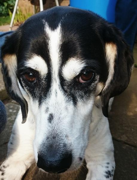 Sad old hound. by JAILER68
