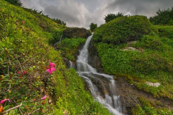 Rhododendron kotschyi Simonka by lica