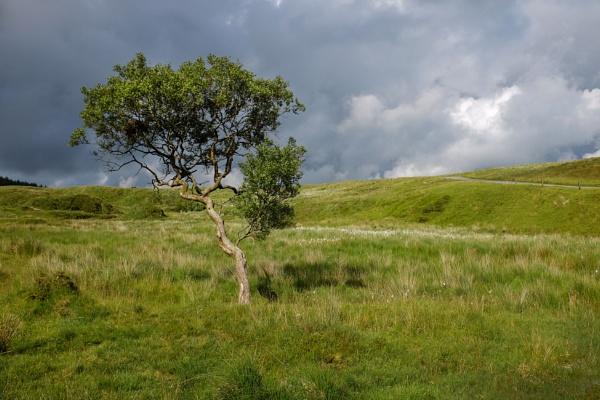Dertmoor Tree re-visited by topsyrm