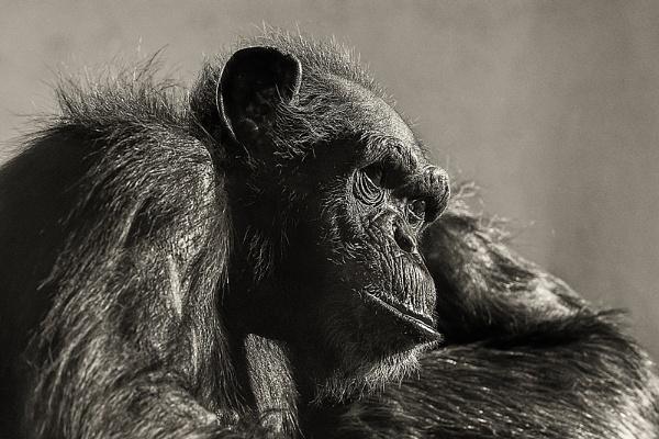 Self Portrait by kaybee