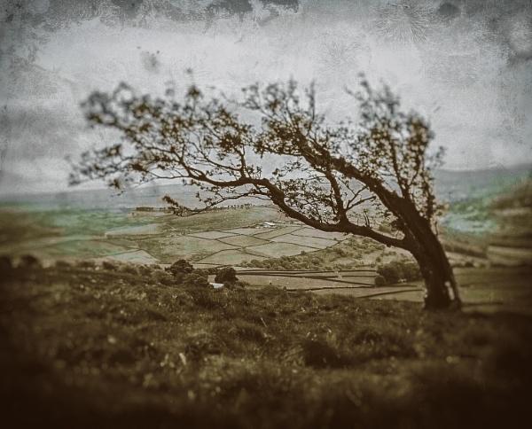 Moorland by gerainte1
