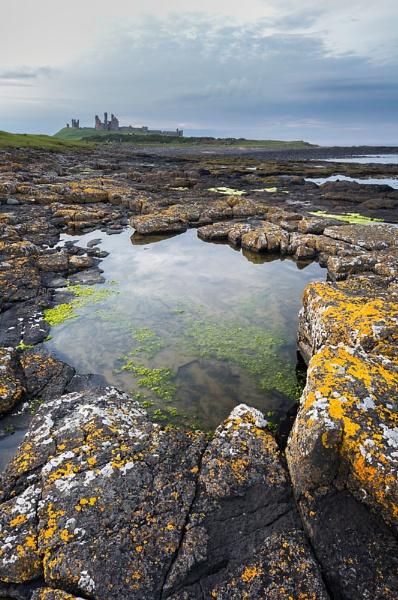 Dunstanburgh Castle and Lichen