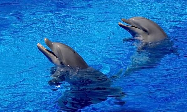 Dolphins at Mundo Mar-Benidorm. by Badgerfred