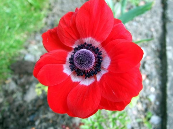 Anemone by sandy22