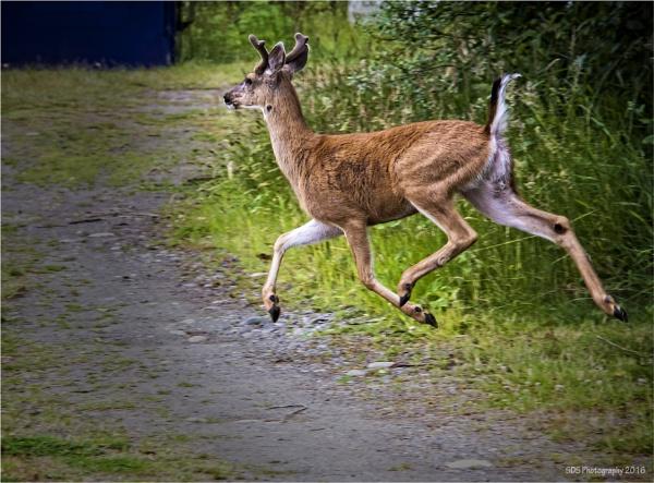 On the Run by Daisymaye
