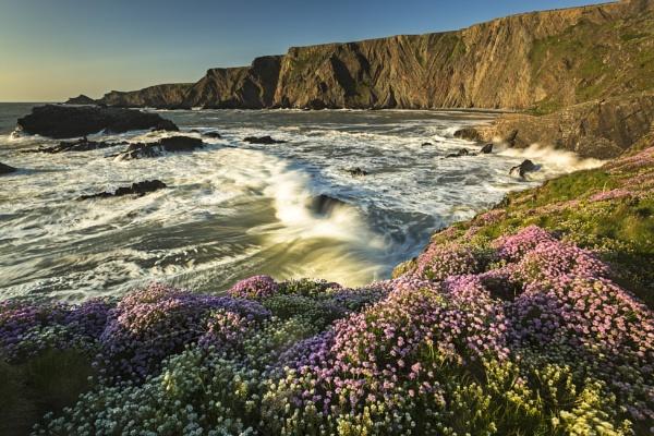 Breaking amongst the sea pinks by JenRogers