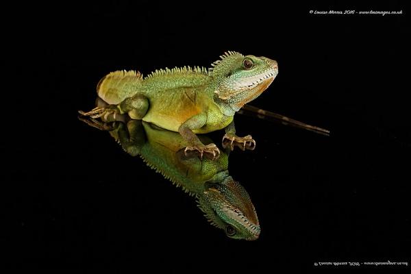 Water Dragon by Louise_Morris