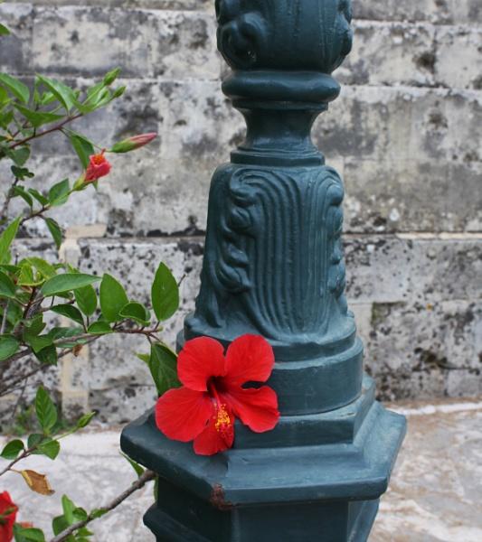 Flowers by ddolfelin