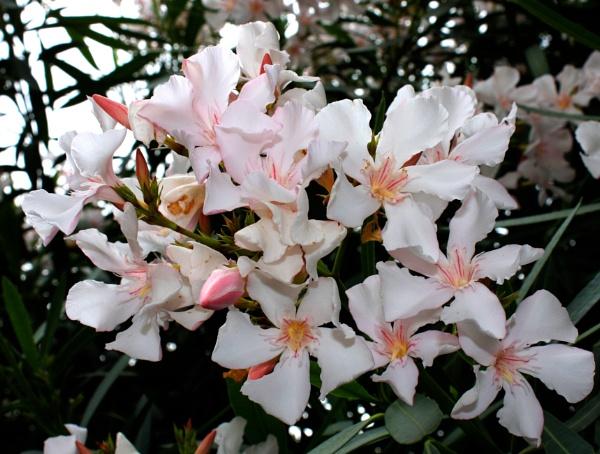 More Flowers by ddolfelin