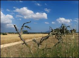 Hot Day in Majorca