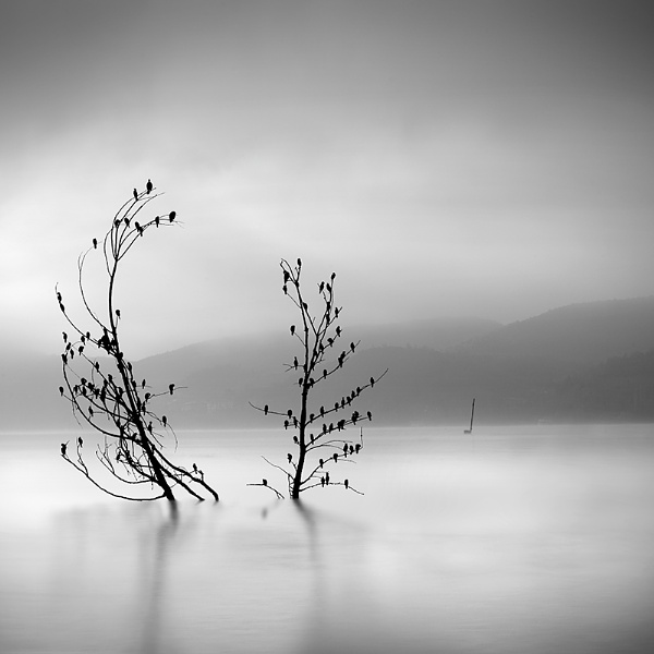 Trees with Birds by Diggeo