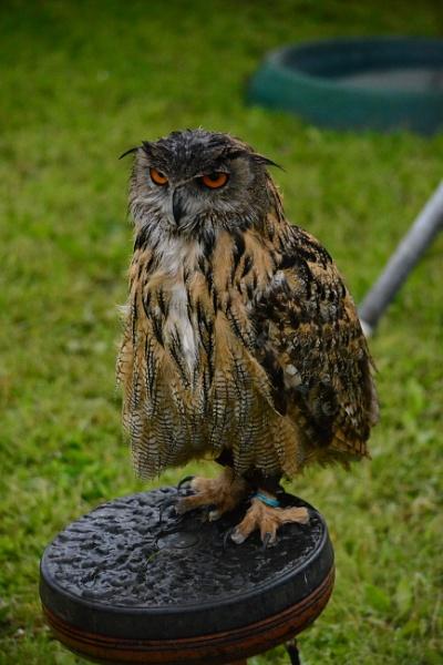 One Wise Bird by jimbob133