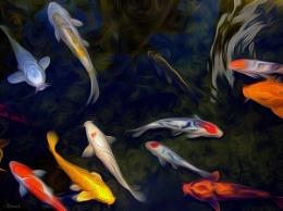Stylized fish