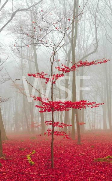 Zauber Wald in rot und weiß by wsfeph