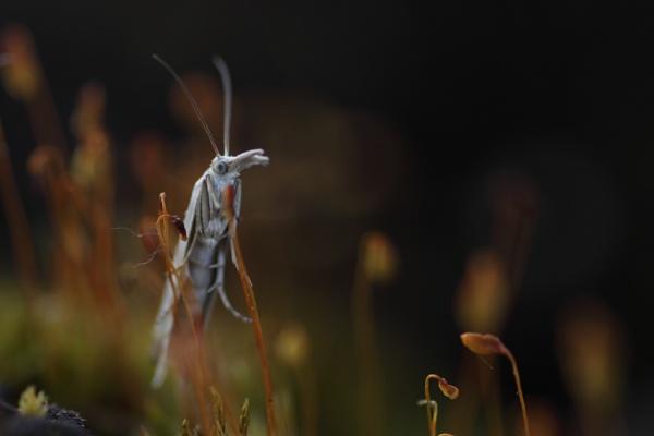 Little fellow by Tayxpole
